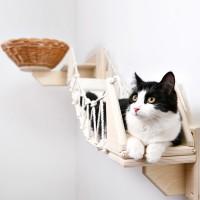 Новинка декабря - комплекс для кошек «Орлиный взгляд»