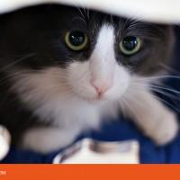Котодром для котиков в зооцентр КиС