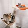 Котодром - модульные игровые комплексы для кошек