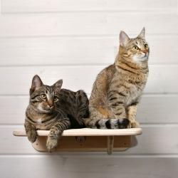 """Полочка для кошек """"Консокки"""""""