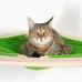 """Гамак для кошки подвесной угловой """"Ханмокку"""""""
