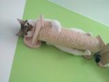 Александр и кот Фуфунь