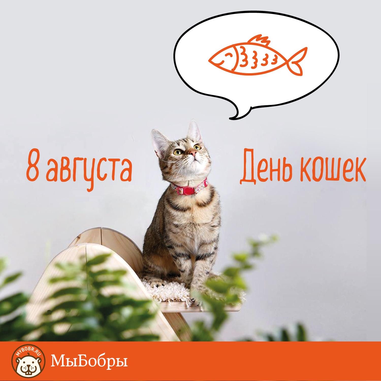 Открытки с днем кота 8 августа